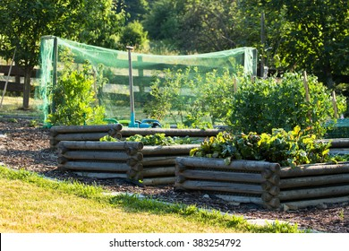 rural garden in the summer with raised vegetable beds and black currant under protection net against birds