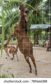 A rural goat farm where goat feeding is quite lovely.