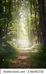 Einspurige Landstrasse durch die hohen grünen Leinenbäume. Sonnenlicht, das durch die Baumstämme fließt. Märchenwaldszene. Kunst, Hoffnung, Himmel, Wildnis, Einsamkeit, reine Naturkonzepte