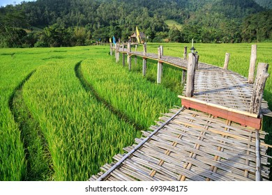 Rural Green rice fields and bamboo bridge in Pai , Mae Hong Son province.