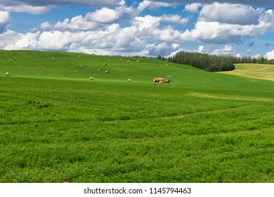Rural hilly landcape of Alberta with forage and cereals field and tractor loading hay bales  in the middle of summer