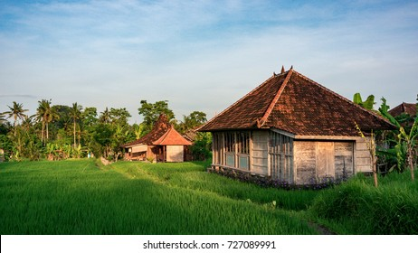 Rural house in morning sunlight standing on the rice field in Penestanan place near Ubud, Bali, Indonesia
