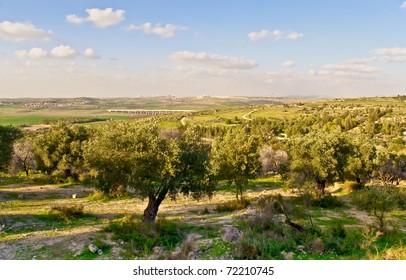 Rural israel landscape at the spring day .