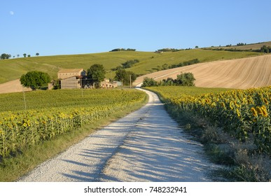 Rural landscape along the road from Filottrano to Appignano (Ancona, Marches, Italy), at summer.