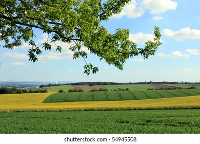 rural landscape and branch of a tree