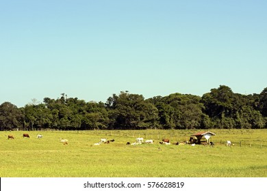 Rural landscape with cattle, pasture and forest