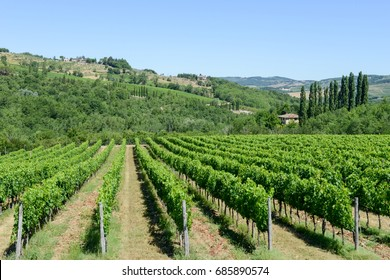 Rural landscape of Chianti vineyards on Tuscany in Italy