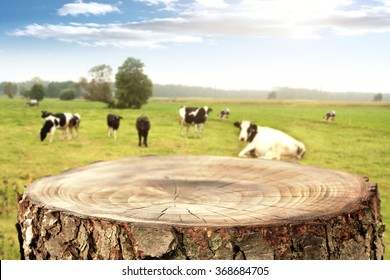 rural landscape of cows and wooden tree space