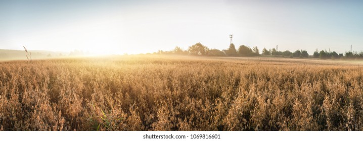 Rural landscape at dawn, terrain with oat fields and from the village on the hill. Panoramic photo.