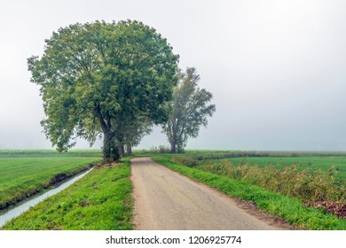 Rural landscape in a Dutch polder with a row of tall willow trees on a curved country road in early morning fog. It is autumn now. The photo was taken near the village of Drimmelen, North Brabant.
