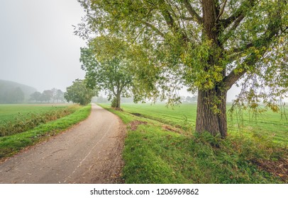 Rural landscape in a Dutch polder with tall willow trees next to a curved country road in early morning fog. It is autumn now. The photo was taken near the village of Drimmelen, North Brabant.