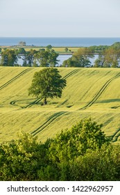 Rural Landscape in early summer with fields, hedges and a lonley tree close to baltic sea, Stöfs Schleswig-Holstein