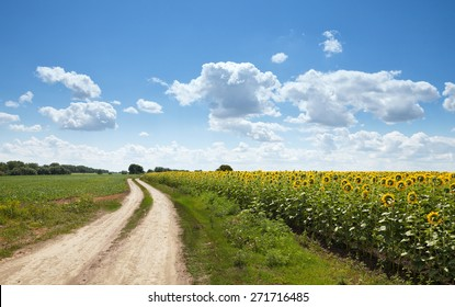 Rural landscape of empty road near sunflower field at summer sunny day