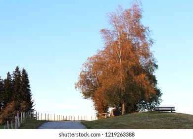 Rural landscape in fall with fence and tree, autumn foliage, Bavaria