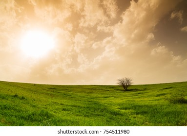 rural landscape, field with green grass and tree
