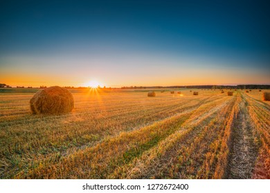 Rural Landscape Field Meadow With Hay Bales During Sunny Evening In Late Summer. Hay Stacks In Sunlight At Summer Sunrise. Bright Sun At Horizon.