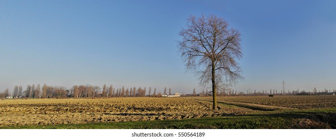 Rural landscape of field with trees