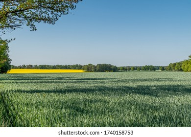rural landscape with fields and meadows
