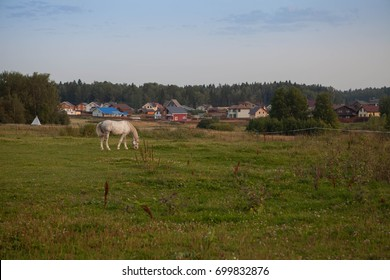 Rural landscape with grazing horse