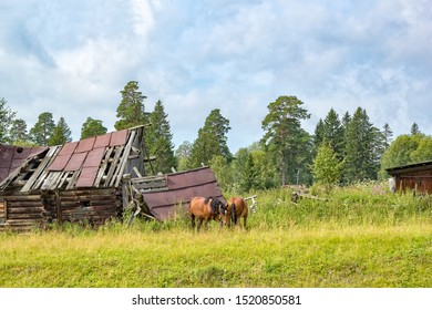 Rural landscape with grazing horses on the background of a destroyed house