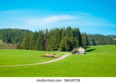 Rural Landscape of a Green Field in Bavaria Germany