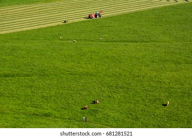 Rural landscape with green meadow, some animals and tractor on sunny summer day in Iceland, view from above