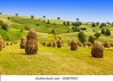 Rural landscape; hey rolls on the field at the mountain, in Bucovina, Romania
