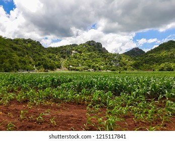 Rural landscape , hills and corn farm in Thailand.