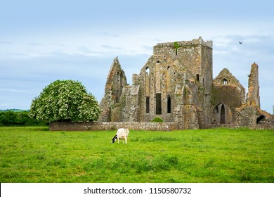 Rural landscape and Hore Abbey ruins, Ireland