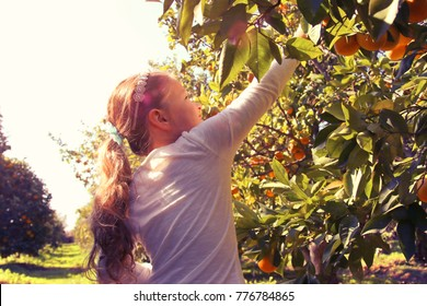Rural landscape image of a cute girl picks oranges from the tree in the citrus plantation. Vintage filtered photo