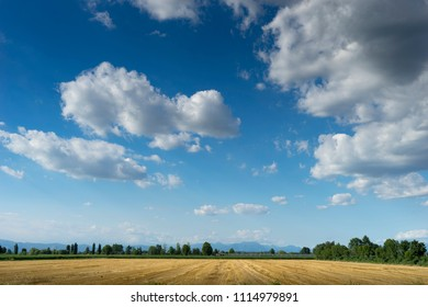 Rural landscape in the PòValley in Italy