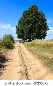 Rural landscape with lonely large tree and dirt road in fields
