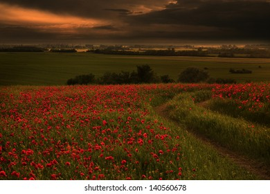 Rural landscape with lots of red poppies in sunset with ray of sunshine.