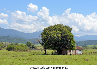 Rural landscape: mango tree in front of a simple house, typical of rural Brazil, with hills and cumulus clouds in the background - Shutterstock ID 1869358411