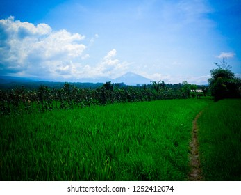 Rural Landscape Of Natural Agriculture At Ringdikit Village, North Bali, Indonesia