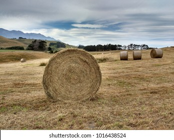 Rural landscape of New Zealand. Rolls os haystack on the field.