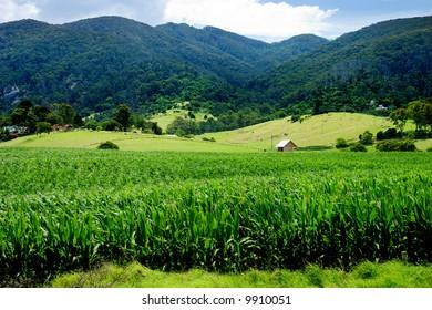 Rural Landscape in NSW