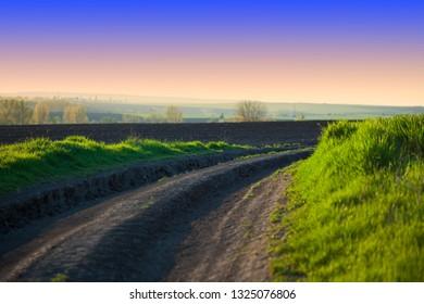 Rural landscape on the field