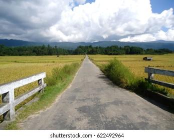 Rural Landscape, Paddy Field of Ziro, Arunachal Pradesh