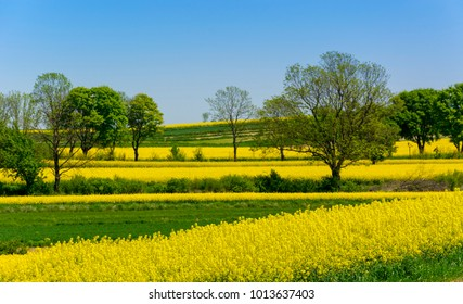 Rural landscape with rape flowers in Roztocze region in Poland