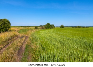 rural landscape with a road and field of wheat in Russia