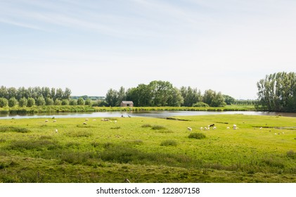 Rural landscape with sheep and a small river with an angling man.