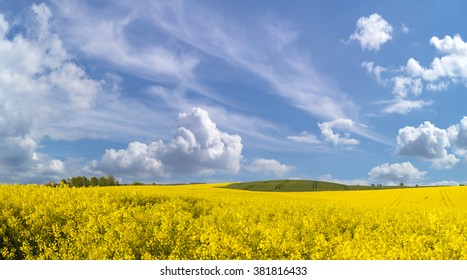 rural Landscape, Spring, field of blooming rapeseed