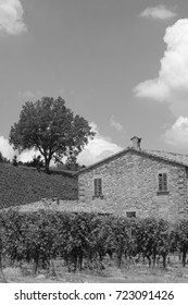 Rural landscape at summer between Modigliana and Faenza (Forli Cesena, Romagna, Italy). Black and white