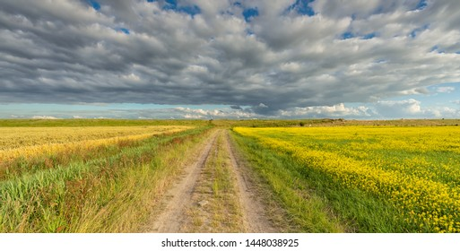 A rural landscape in summer with a blue sky and clouds and an countryside road through the fields in summer - Groningen, The Netherlands