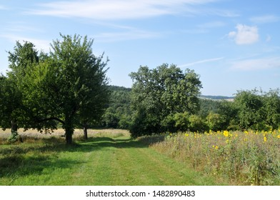 rural landscape in summertime with forest, fields and grass covered country lane