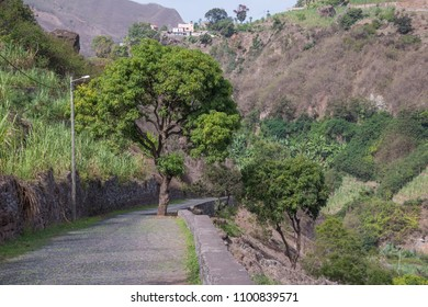 Rural landscape with tree in the middle of a road in the Paul Valley on the island of Santo Antao in Cape Verde
