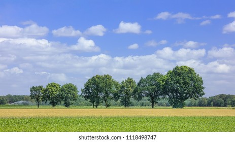 Rural landscape with trees on a summer day, Ravels, Belgium