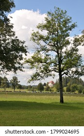 Paisaje rural con árboles en los alrededores de Fussen