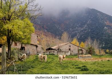 Rural landscape in Viladrau, Catalonia